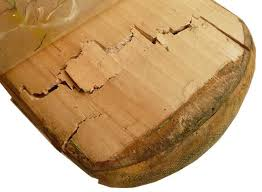 broken-cricket-bat